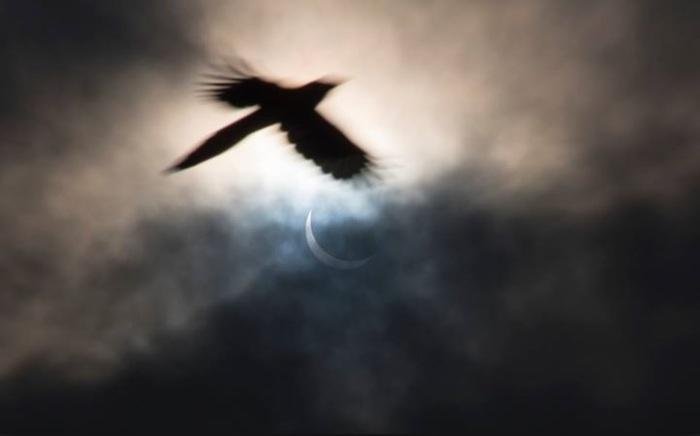 Dark Bird Pic II